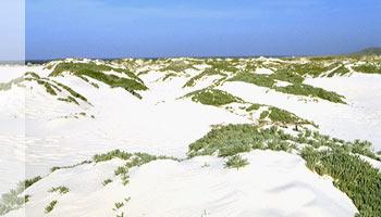Sand Dunes in Aruba
