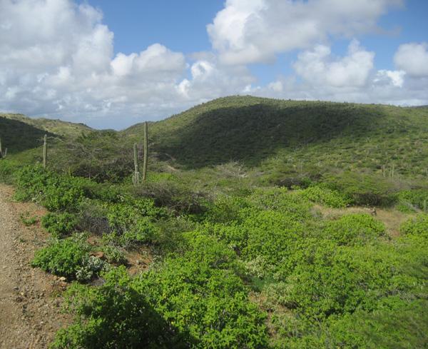 Beautiful View of Arikok National Park