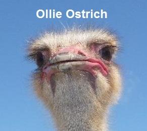 Aruba Ostrich Farm Occupant